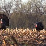 Best Time to Turkey Hunt