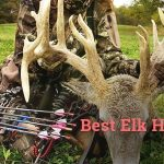 best elk hunting bows