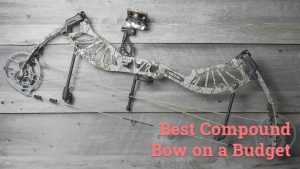 best compound bow on a budget